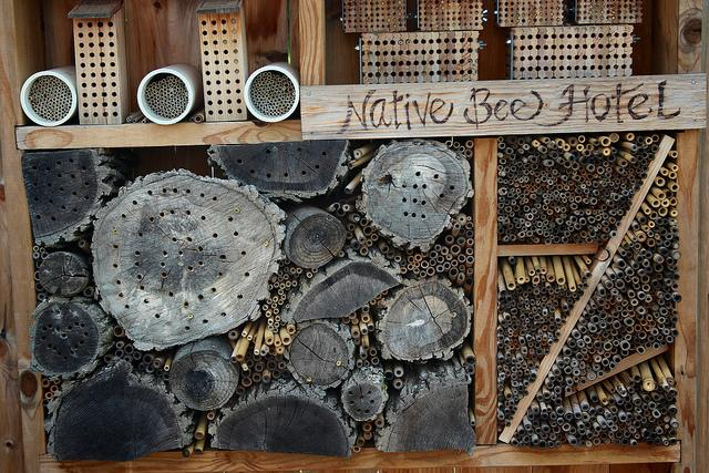 Bee hotel native bees.