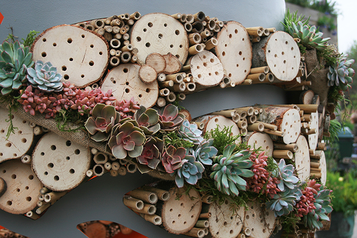 Bee hotel decorated with succulents.